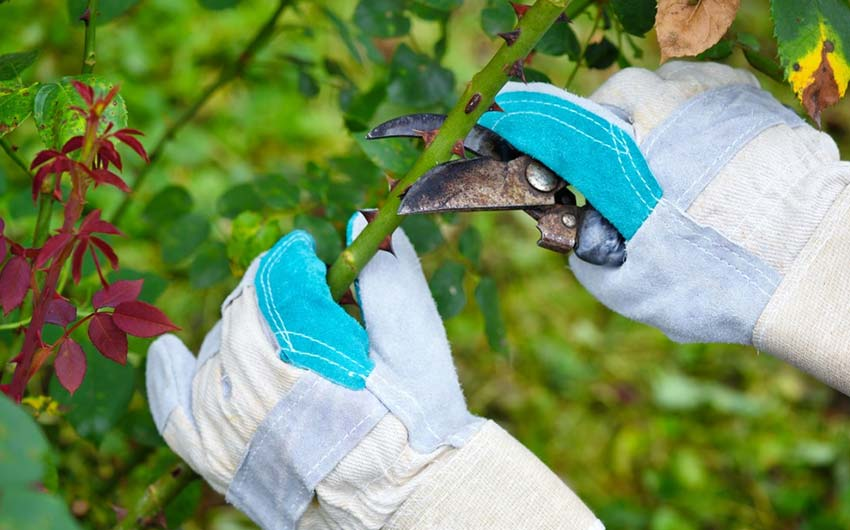 Gardening Gloves for thorn