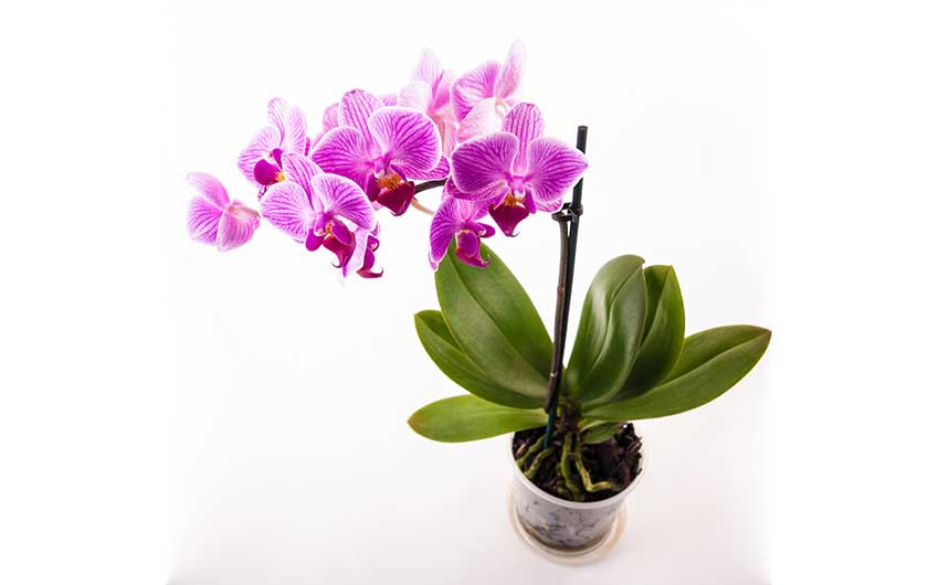 Best Pot for Orchids