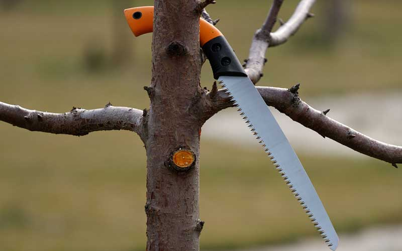 best Pruning Saw